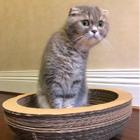 猫猫gloria