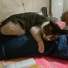 刘先生的猫