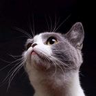 爱吃鱼的懒猫